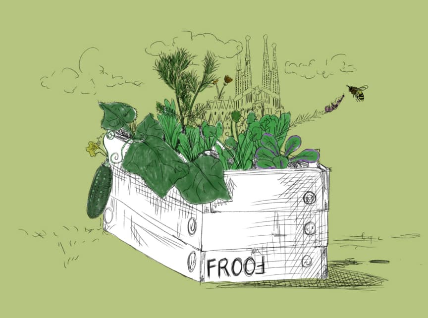 Sketch of FROOF vegetable box